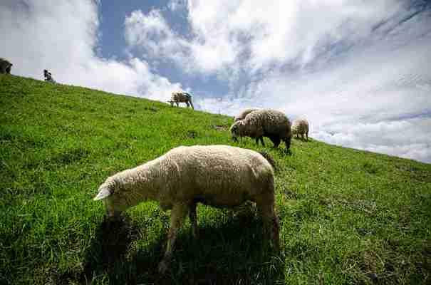 Kredyt rolniczy na zakup ziemi