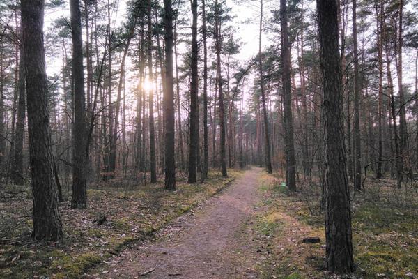 Drewno - odnawialny i cenny surowiec energetyczny