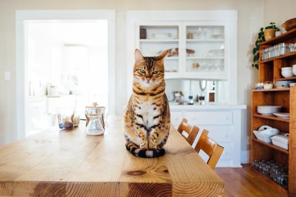 Fotografia smartfonem: Jak zrobić dobre zdjęcia psa, kota czy innego zwierzaka?